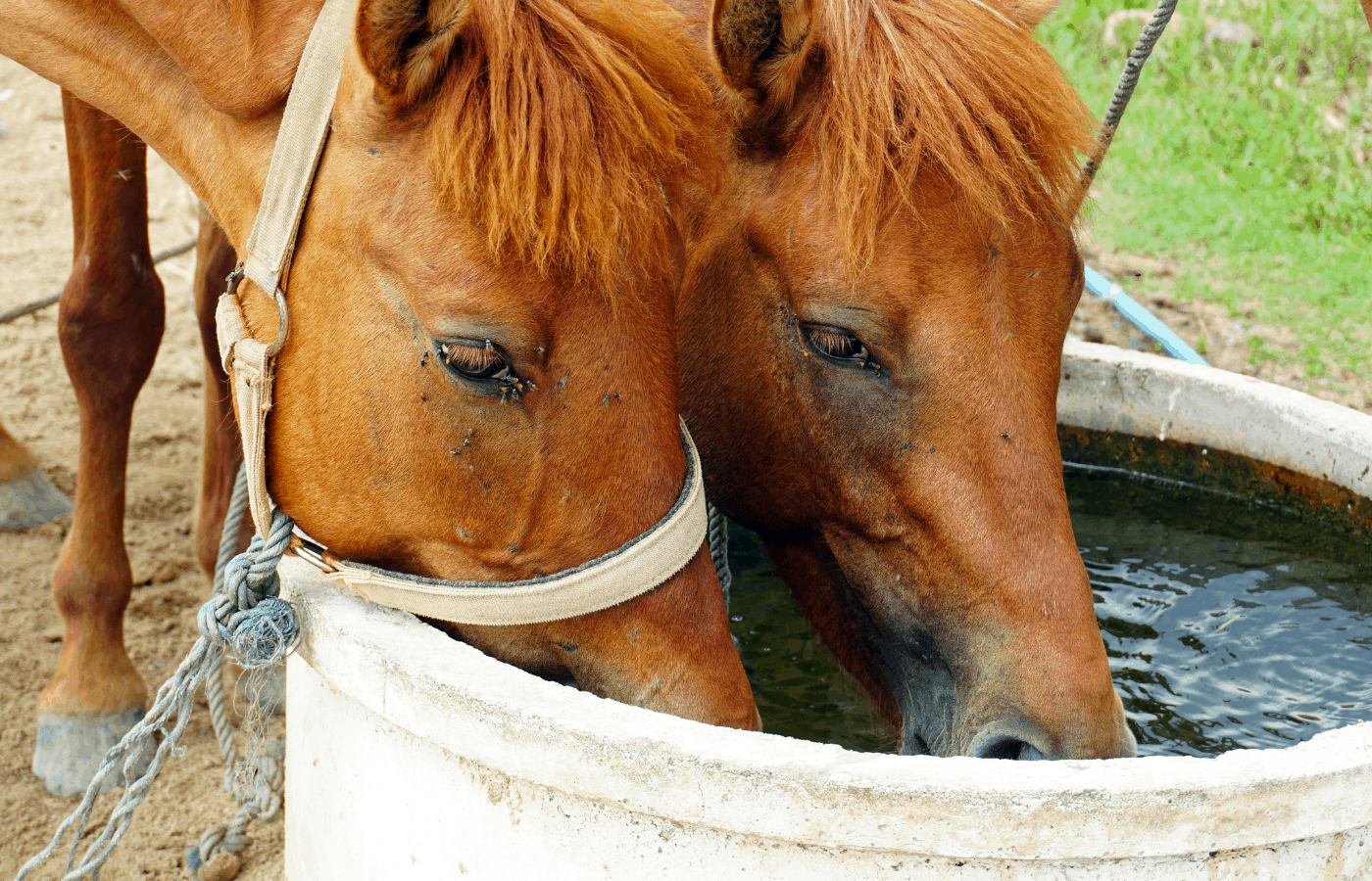 is rainwater safe for horses to drink