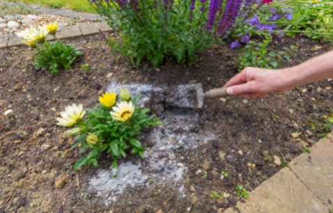 What Is the Best Way to Use Firewood Ash as Fertilizer