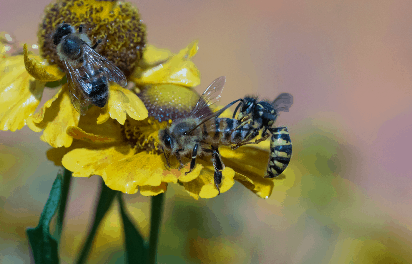 does citronella oil repel wasps and bees
